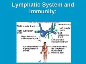 Lymphatic System and Immunity Lymphatic System n n