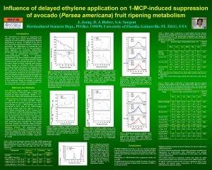 Influence of delayed ethylene application on 1 MCPinduced