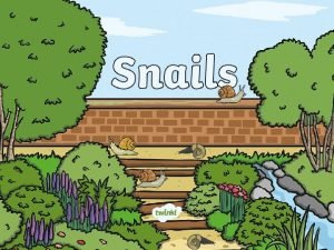 What Are Snails Snails are parts of the
