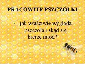 PRACOWITE PSZCZKI jak waciwie wyglda pszczoa i skd