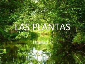 LAS PLANTAS Unidad 3 CARACTERSTICAS DE LAS PLANTAS