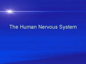 The Human Nervous System The Nervous System has