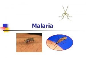 Malaria What is malaria n Name means bad