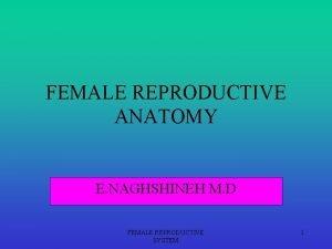 FEMALE REPRODUCTIVE ANATOMY E NAGHSHINEH M D FEMALE