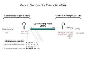 Generic Structure of a Eukaryotic m RNA 3untranslated