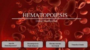 HEMATOPOIESIS Diniati Mardhotillah Apa itu Hematopoiesis Hematopoiesis Pada