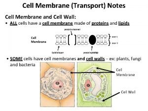Cell Membrane Transport Notes Cell Membrane and Cell