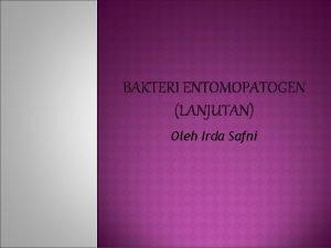 BAKTERI ENTOMOPATOGEN LANJUTAN Oleh Irda Safni Bakteri yang