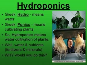 Hydroponics Greek Hydro means water Greek Ponics means