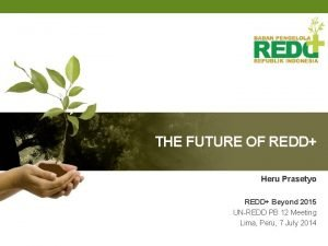 THE FUTURE OF REDD Heru Prasetyo REDD Beyond