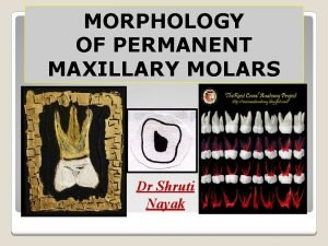 MORPHOLOGY OF PERMANENT MAXILLARY MOLARS Dr Shruti Nayak