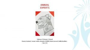 ANIMAL EXPERTS Auburn Primary School Sharon Woodard Yasmin