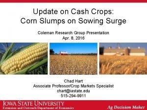 Update on Cash Crops Corn Slumps on Sowing