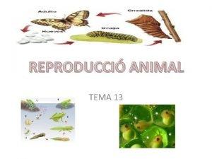 REPRODUCCI ANIMAL TEMA 13 REPRODUCCI SEXUAL I FECUNDACI