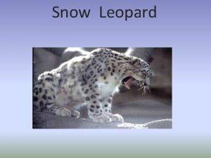 Snow Leopard Snow Leopard The snow leopard Panther
