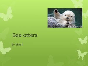 Sea otters By Ellie R What is a