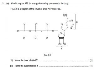 Anaerobic Respiration Learning objectives explain why anaerobic respiration