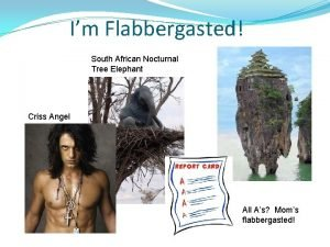 Im Flabbergasted South African Nocturnal Tree Elephant Criss