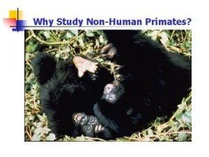 Why Study NonHuman Primates Why Study NonHuman Primates