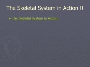 The Skeletal System in Action The Skeletal System