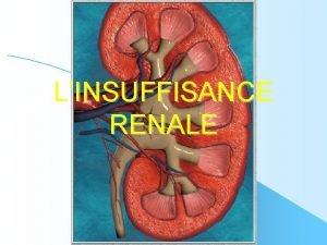 LINSUFFISANCE RENALE PLAN I Rappel anatomophysiologique II Linsuffisance