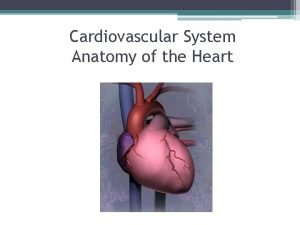 Cardiovascular System Anatomy of the Heart The Cardiovascular