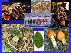 Mushrooms Club Like Fungi or Basidiomycete Fungi others