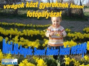 Els helyezet Ocsk Ozirisz Nutri LABAngelic Sweet Babies