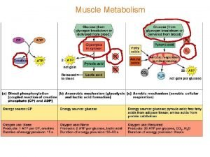 Muscle Metabolism Muscle metabolism ATP is energy source