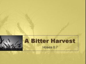 A Bitter Harvest Hosea 8 7 Sowing Your