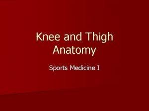 Knee and Thigh Anatomy Sports Medicine I Knee