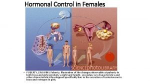 Hormonal Control in Females PUBERTY DRAWING Puberty Illustration