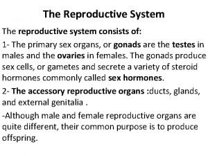 The Reproductive System The reproductive system consists of