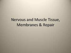 Nervous and Muscle Tissue Membranes Repair Nerve Tissue