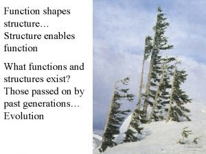 Function shapes structure Structure enables function What functions