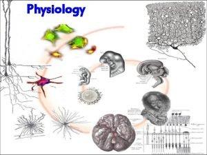 Physiology Animal Physiology Animal organ System Homeostsis Animal