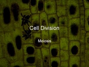 Cell Division Meiosis Definition Cell division by which
