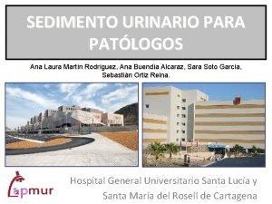 SEDIMENTO URINARIO PARA PATLOGOS Ana Laura Martn Rodrguez