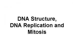 DNA Structure DNA Replication and Mitosis DNA chromosomes