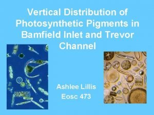 Vertical Distribution of Photosynthetic Pigments in Bamfield Inlet