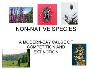 NONNATIVE SPECIES A MODERNDAY CAUSE OF COMPETITION AND