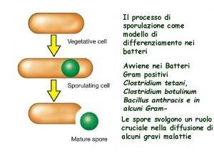 Il processo di sporulazione come modello di differenziamento