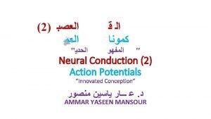 Myelinated Motor Axon Soma Synapse Presynaptic Axon Knob