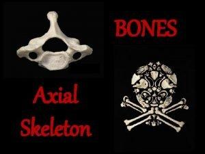 BONES Axial Skeleton Cranial Bones Facial Bones Cranial