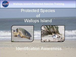 Wallops Island Protected Species Training Protected Species of