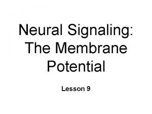 Neural Signaling The Membrane Potential Lesson 9 Membrane