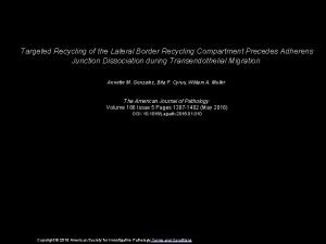 Targeted Recycling of the Lateral Border Recycling Compartment