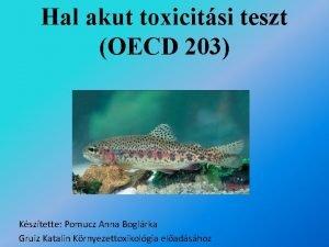 Hal akut toxicitsi teszt OECD 203 Ksztette Pomucz