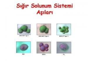 Sr Solunum Sistemi Alar IBRIPV Bo HV1 Enfeksiyonu