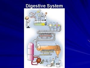 Digestive System The main role of the digestive